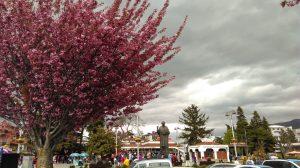 eray-önler-blossom-tree